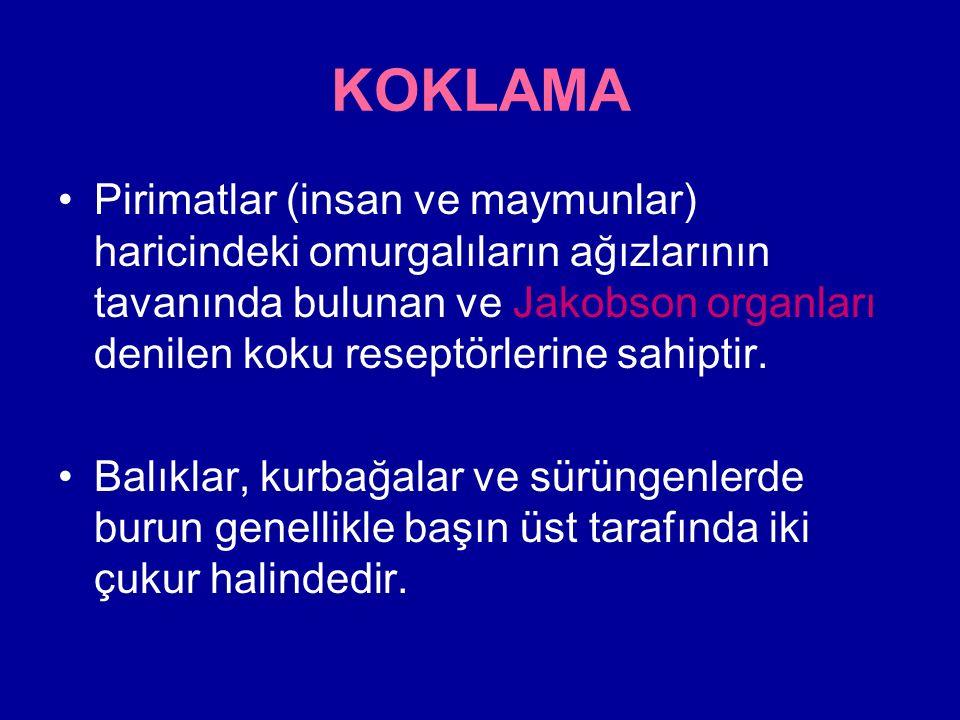 KOKLAMA