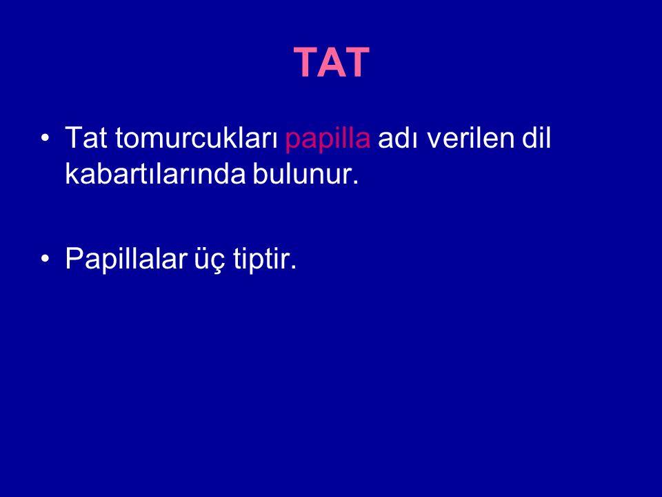 TAT Tat tomurcukları papilla adı verilen dil kabartılarında bulunur.