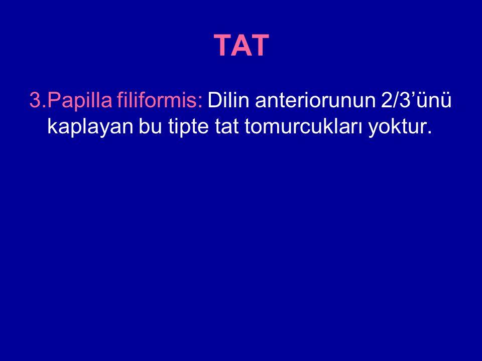 TAT 3.Papilla filiformis: Dilin anteriorunun 2/3'ünü kaplayan bu tipte tat tomurcukları yoktur.
