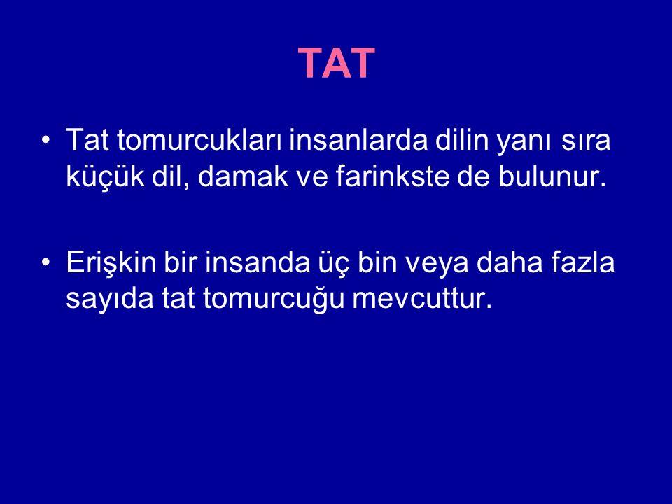 TAT Tat tomurcukları insanlarda dilin yanı sıra küçük dil, damak ve farinkste de bulunur.