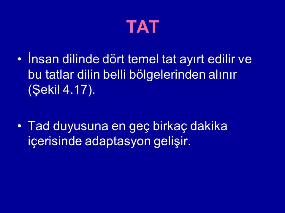 TAT İnsan dilinde dört temel tat ayırt edilir ve bu tatlar dilin belli bölgelerinden alınır (Şekil 4.17).