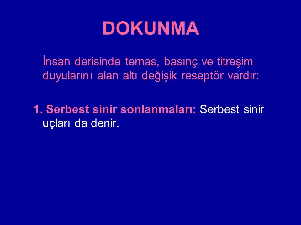 DOKUNMA İnsan derisinde temas, basınç ve titreşim duyularını alan altı değişik reseptör vardır: