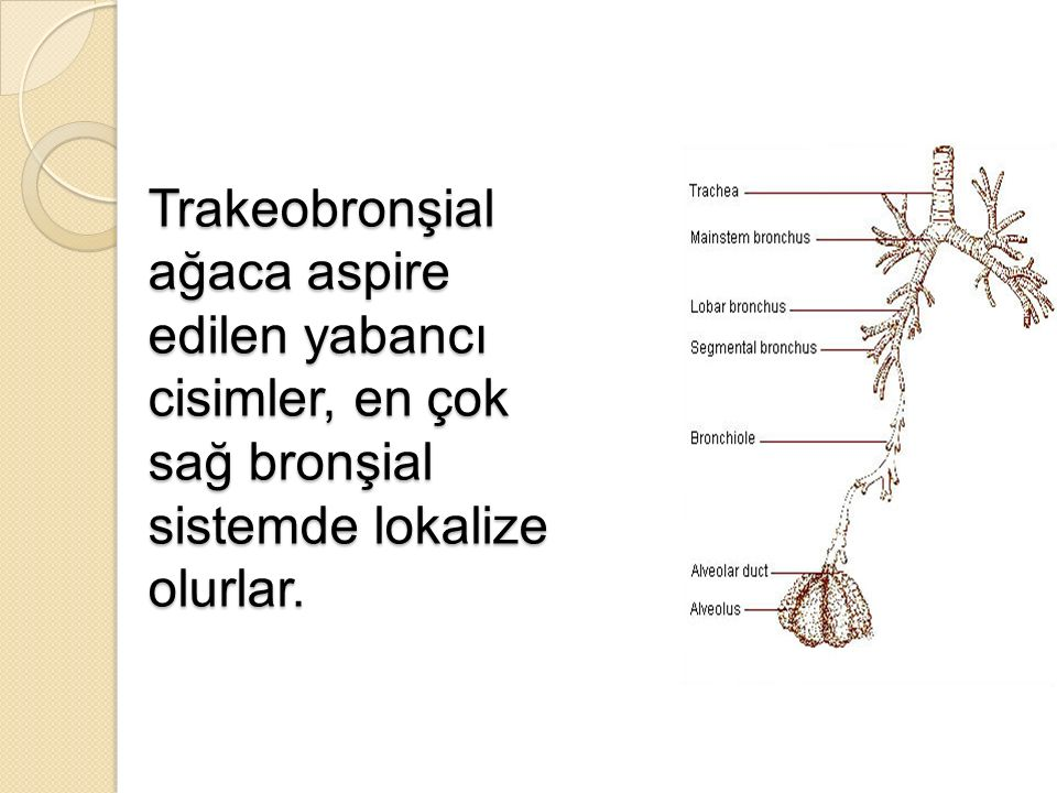 Trakeobronşial ağaca aspire edilen yabancı cisimler, en çok sağ bronşial sistemde lokalize olurlar.