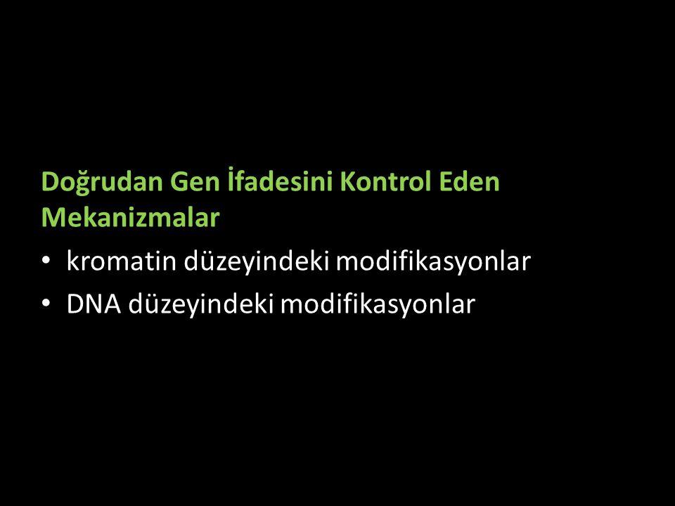 Doğrudan Gen İfadesini Kontrol Eden Mekanizmalar