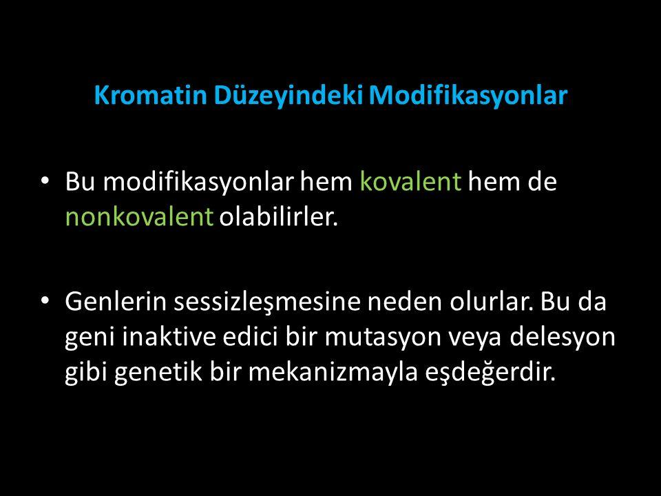 Kromatin Düzeyindeki Modifikasyonlar