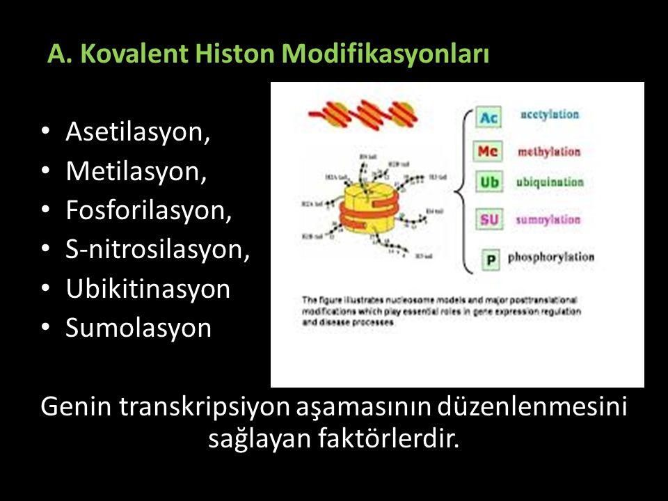 Genin transkripsiyon aşamasının düzenlenmesini sağlayan faktörlerdir.