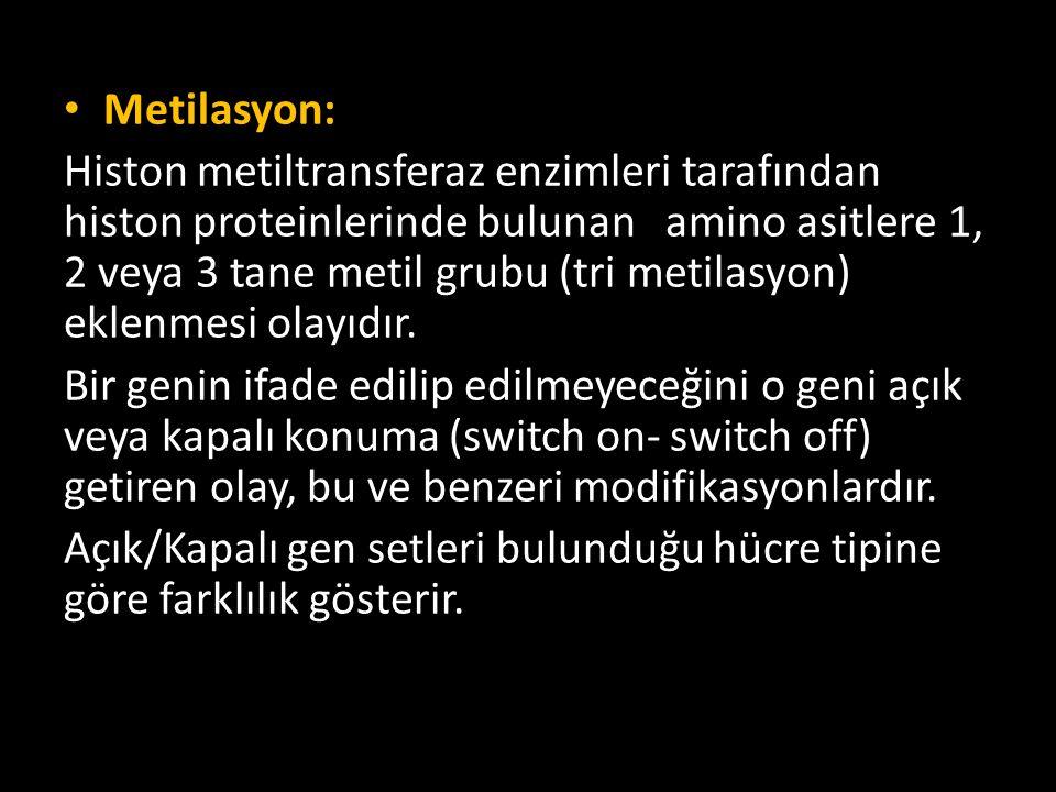 Metilasyon: