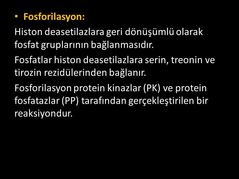 Fosforilasyon: Histon deasetilazlara geri dönüşümlü olarak fosfat gruplarının bağlanmasıdır.