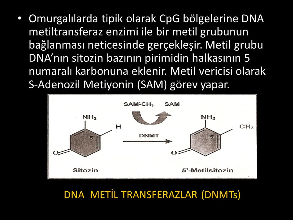 DNA METİL TRANSFERAZLAR (DNMTs)