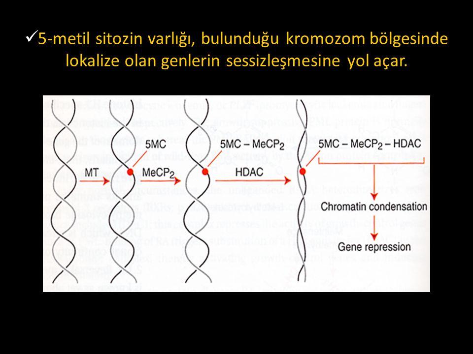 5-metil sitozin varlığı, bulunduğu kromozom bölgesinde lokalize olan genlerin sessizleşmesine yol açar.