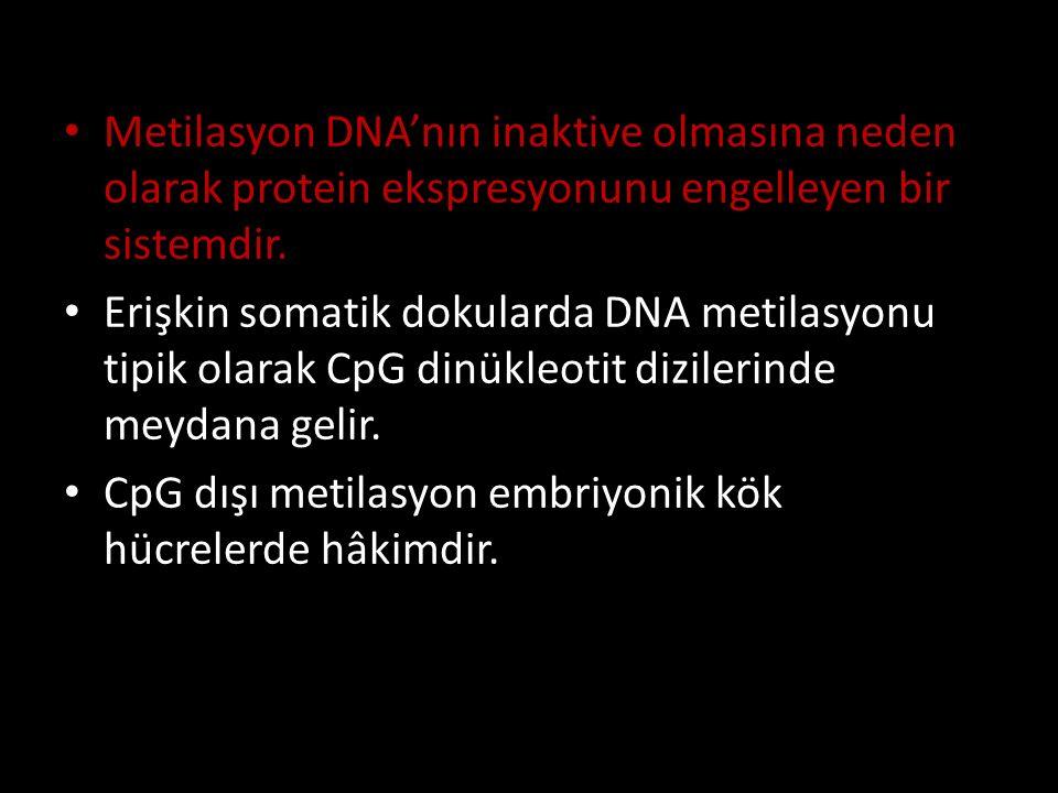 Metilasyon DNA'nın inaktive olmasına neden olarak protein ekspresyonunu engelleyen bir sistemdir.