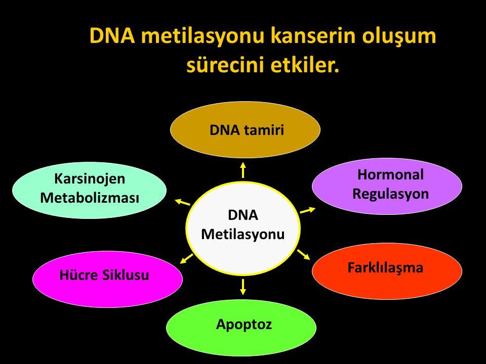 DNA metilasyonu kanserin oluşum sürecini etkiler.