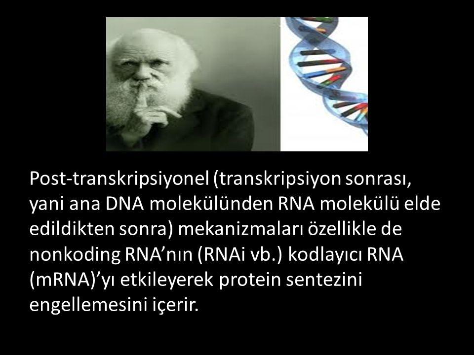 Post-transkripsiyonel (transkripsiyon sonrası, yani ana DNA molekülünden RNA molekülü elde edildikten sonra) mekanizmaları özellikle de nonkoding RNA'nın (RNAi vb.) kodlayıcı RNA (mRNA)'yı etkileyerek protein sentezini engellemesini içerir.