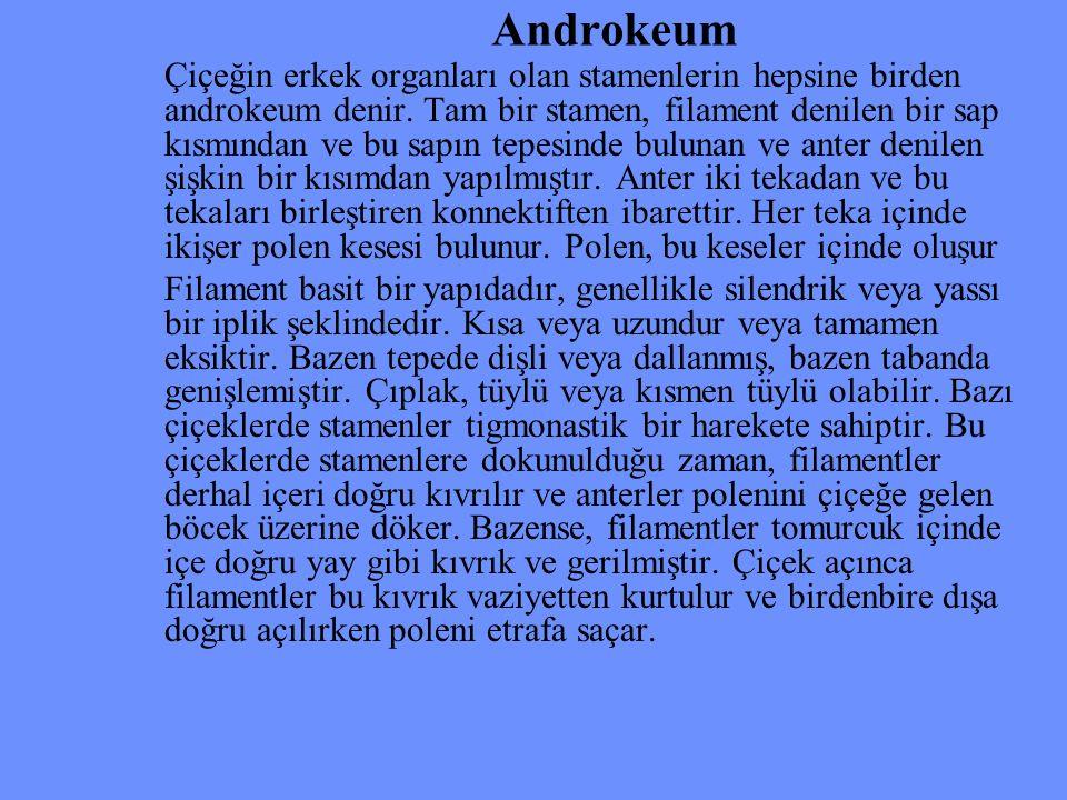 Androkeum