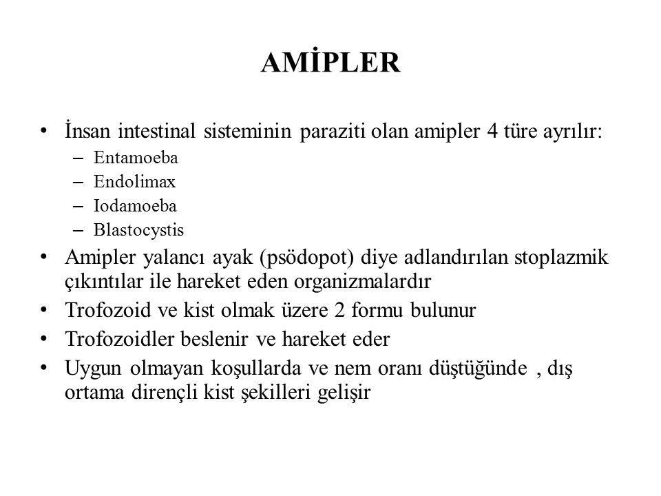 AMİPLER İnsan intestinal sisteminin paraziti olan amipler 4 türe ayrılır: Entamoeba. Endolimax. Iodamoeba.