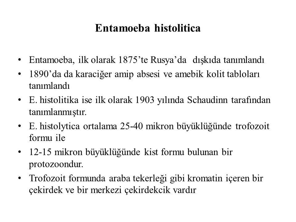 Entamoeba histolitica