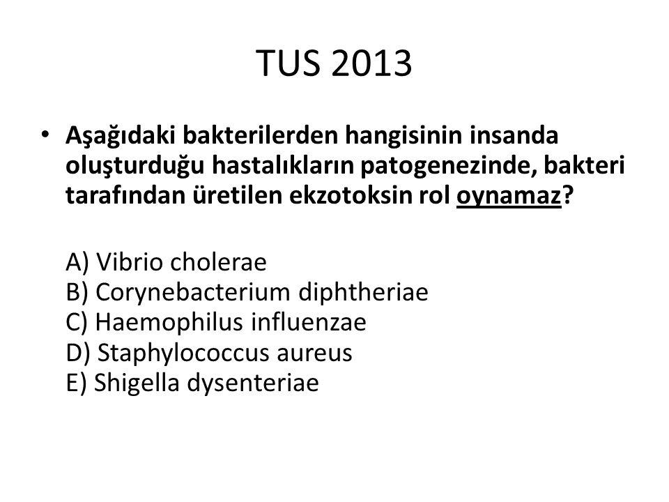 TUS 2013 Aşağıdaki bakterilerden hangisinin insanda oluşturduğu hastalıkların patogenezinde, bakteri tarafından üretilen ekzotoksin rol oynamaz