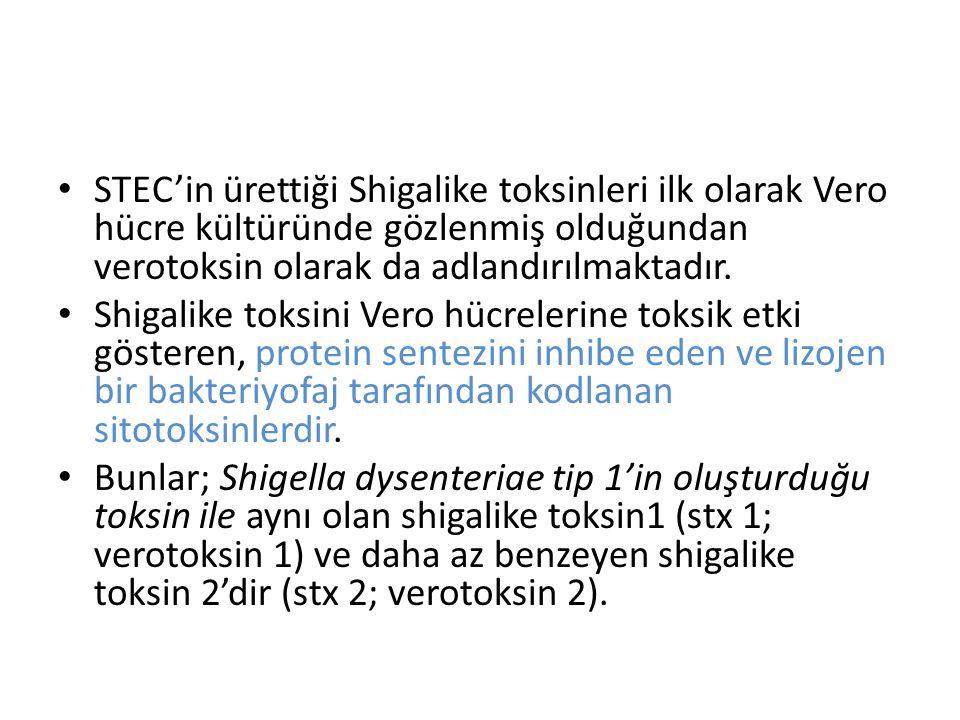 STEC'in ürettiği Shigalike toksinleri ilk olarak Vero hücre kültüründe gözlenmiş olduğundan verotoksin olarak da adlandırılmaktadır.