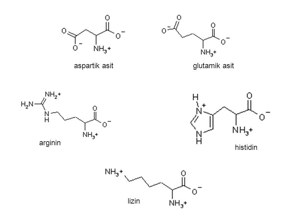 aspartik asit glutamik asit arginin histidin lizin