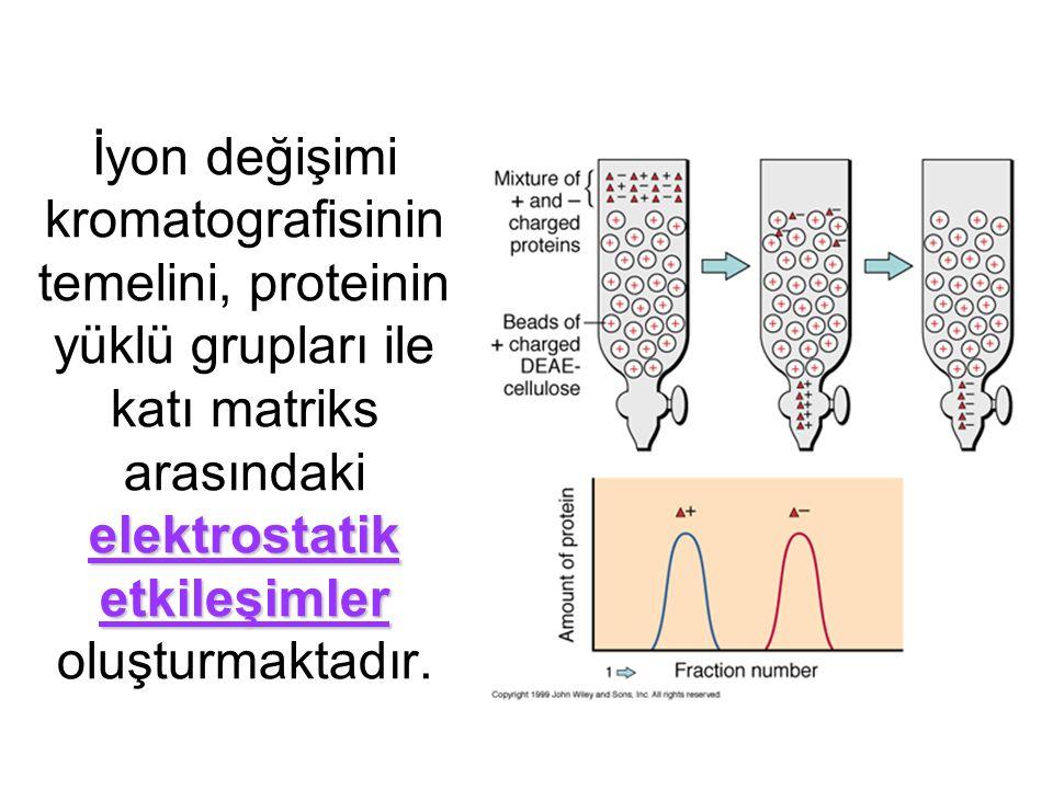 İyon değişimi kromatografisinin temelini, proteinin yüklü grupları ile katı matriks arasındaki elektrostatik etkileşimler oluşturmaktadır.