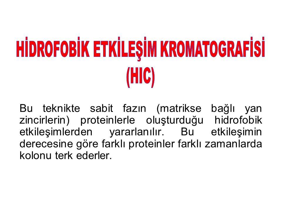 HİDROFOBİK ETKİLEŞİM KROMATOGRAFİSİ