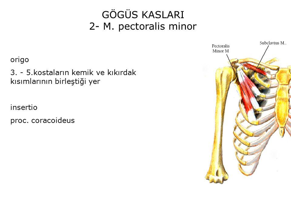 GÖGÜS KASLARI 2- M. pectoralis minor origo