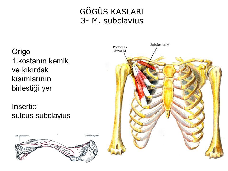 GÖGÜS KASLARI 3- M. subclavius. Origo. 1.kostanın kemik ve kıkırdak kısımlarının birleştiği yer. Insertio.