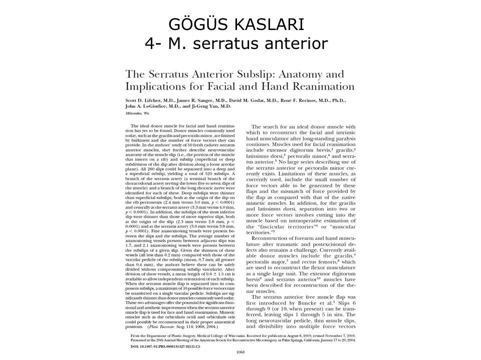 GÖGÜS KASLARI 4- M. serratus anterior