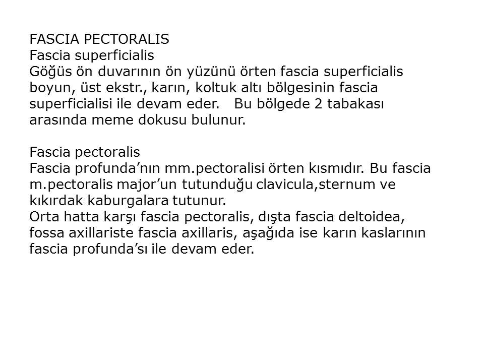 FASCIA PECTORALIS Fascia superficialis.