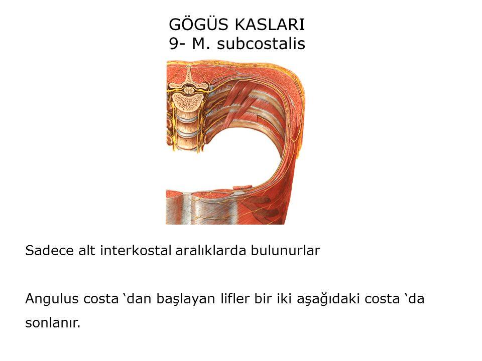 GÖGÜS KASLARI 9- M. subcostalis