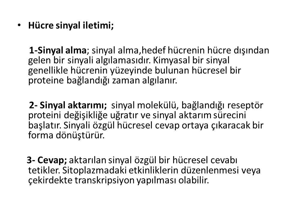Hücre sinyal iletimi;