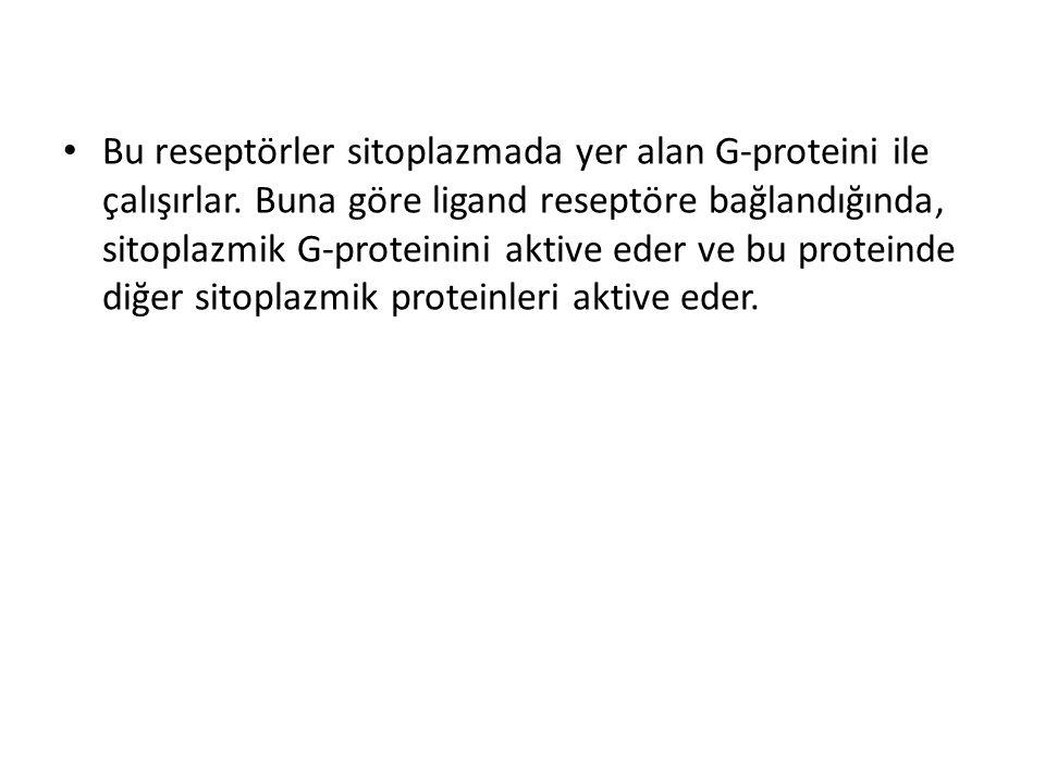 Bu reseptörler sitoplazmada yer alan G-proteini ile çalışırlar