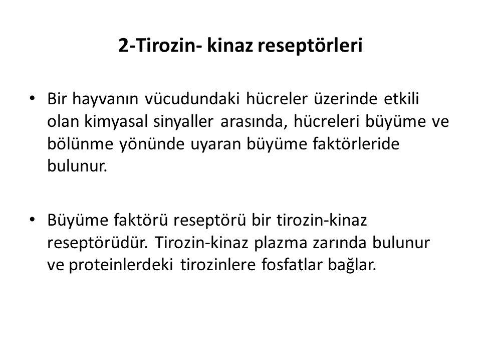 2-Tirozin- kinaz reseptörleri