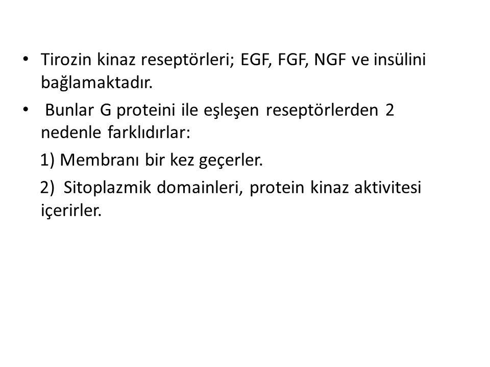 Tirozin kinaz reseptörleri; EGF, FGF, NGF ve insülini bağlamaktadır.