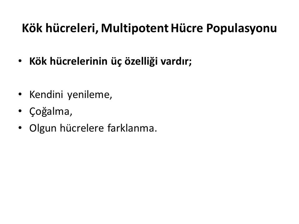 Kök hücreleri, Multipotent Hücre Populasyonu
