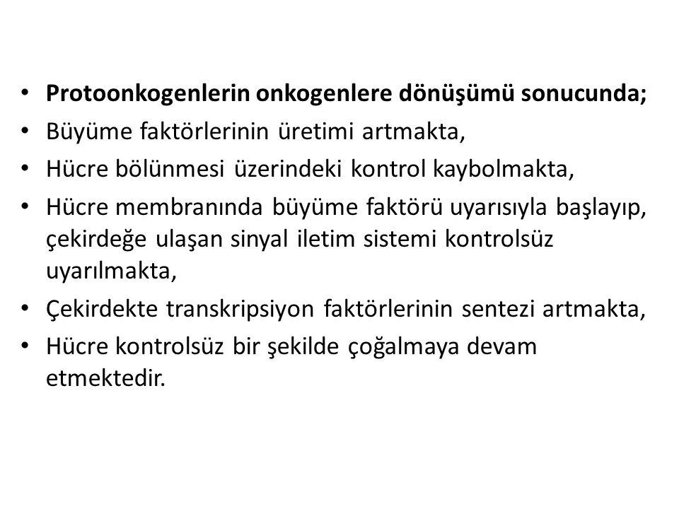 Protoonkogenlerin onkogenlere dönüşümü sonucunda;