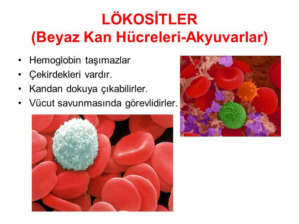 LÖKOSİTLER (Beyaz Kan Hücreleri-Akyuvarlar)