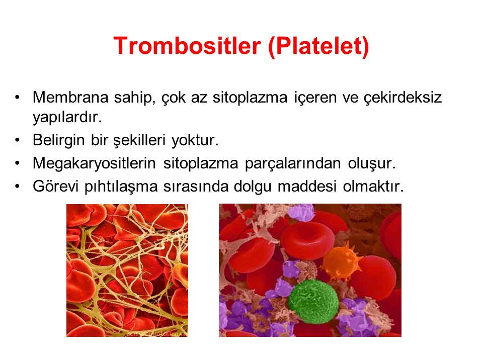 Trombositler (Platelet)