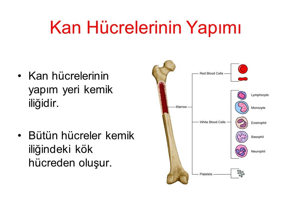 Kan Hücrelerinin Yapımı