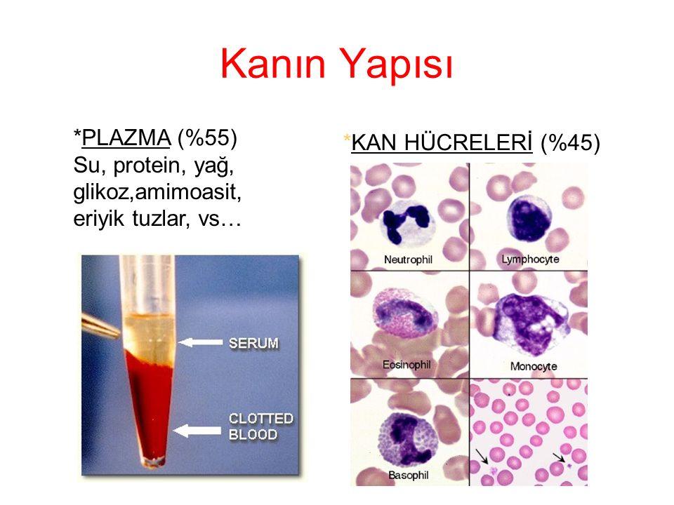 Kanın Yapısı *PLAZMA (%55) *KAN HÜCRELERİ (%45)