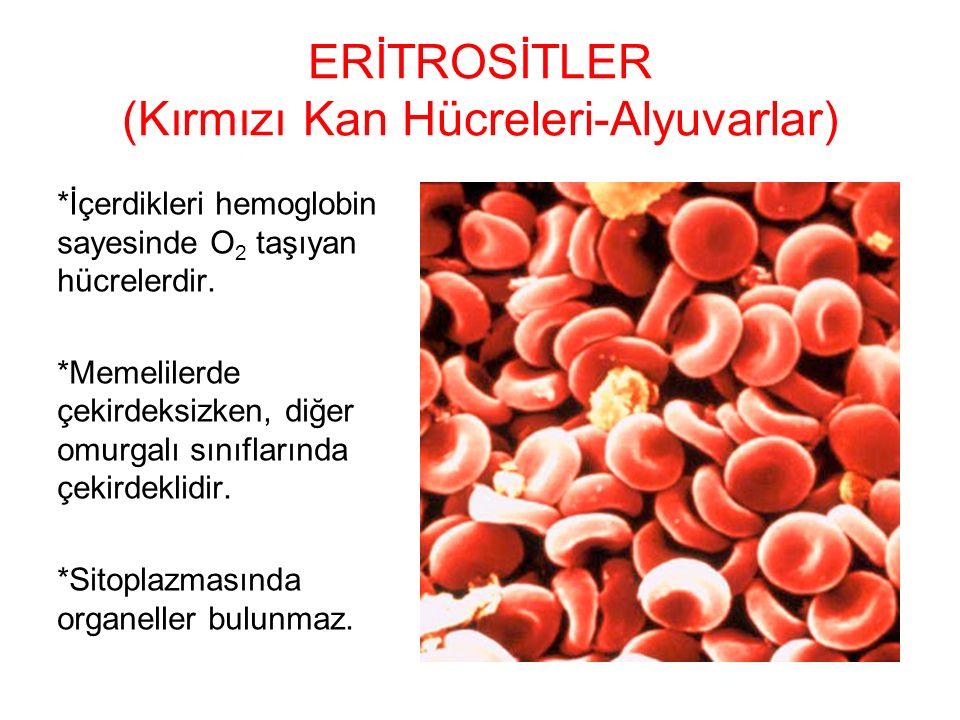ERİTROSİTLER (Kırmızı Kan Hücreleri-Alyuvarlar)
