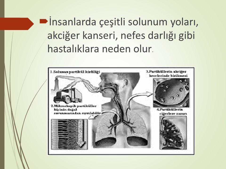 İnsanlarda çeşitli solunum yoları, akciğer kanseri, nefes darlığı gibi hastalıklara neden olur.