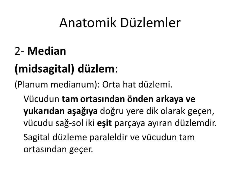 Anatomik Düzlemler 2- Median (midsagital) düzlem: