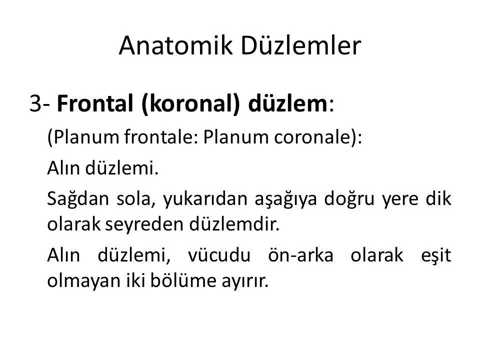 Anatomik Düzlemler 3- Frontal (koronal) düzlem: