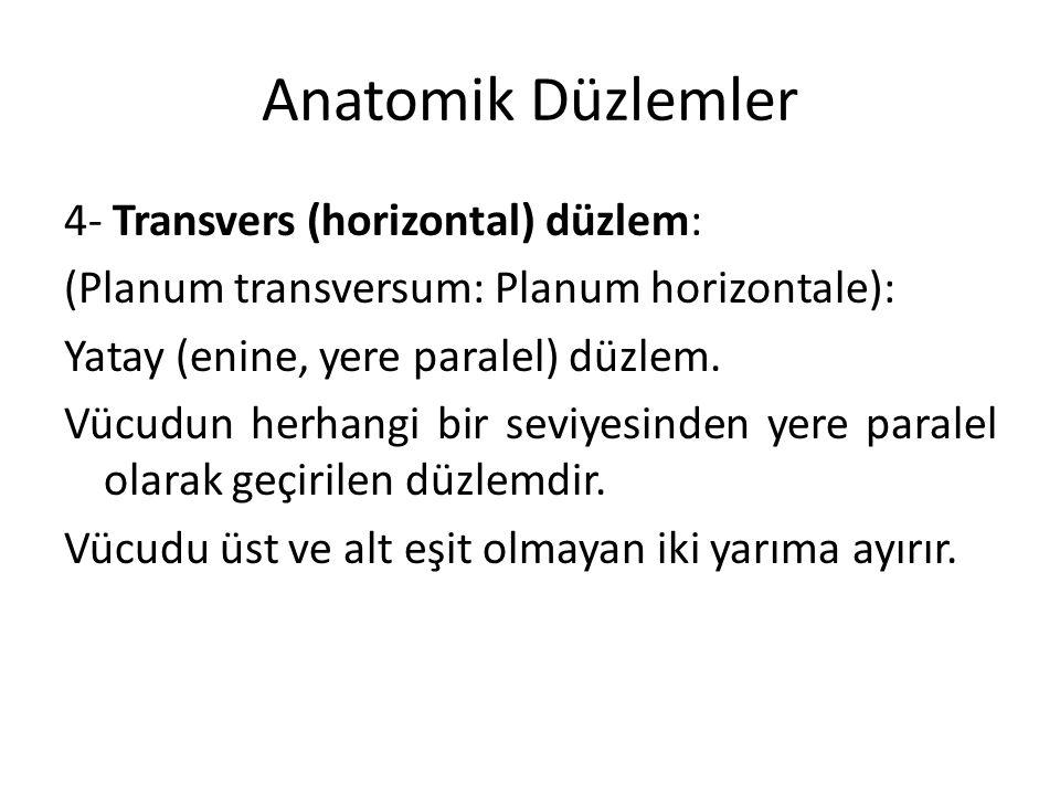 Anatomik Düzlemler
