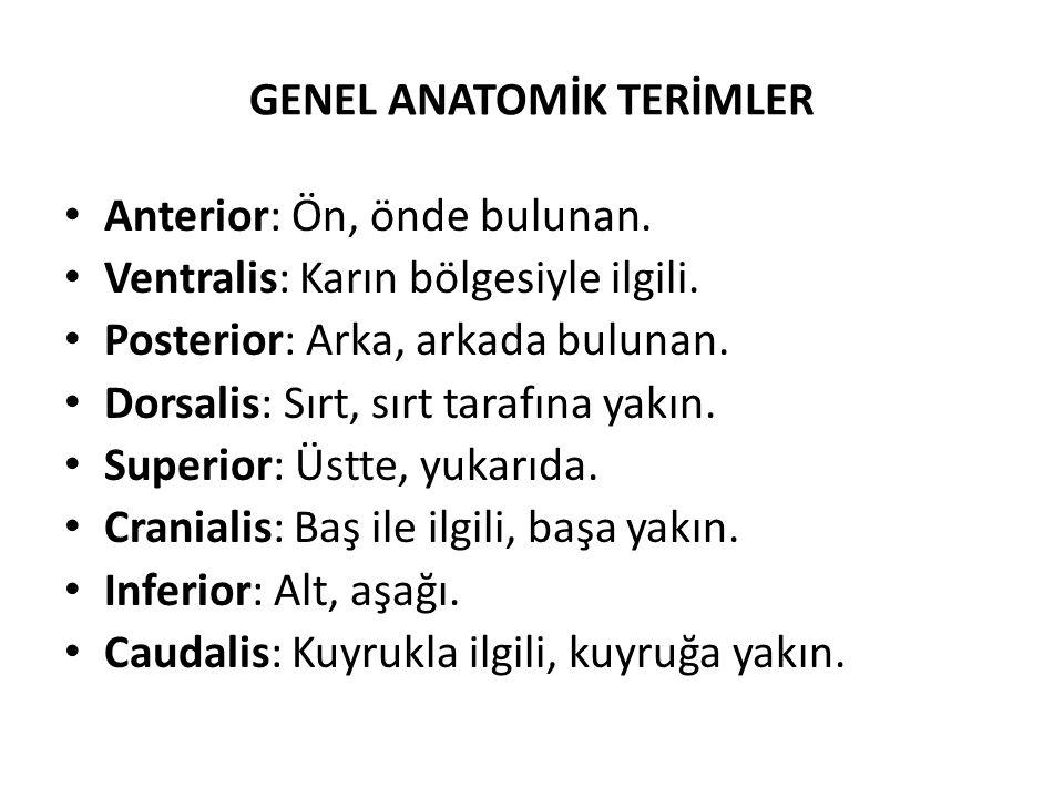 GENEL ANATOMİK TERİMLER