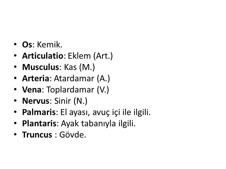Os: Kemik. Articulatio: Eklem (Art.) Musculus: Kas (M.) Arteria: Atardamar (A.) Vena: Toplardamar (V.)