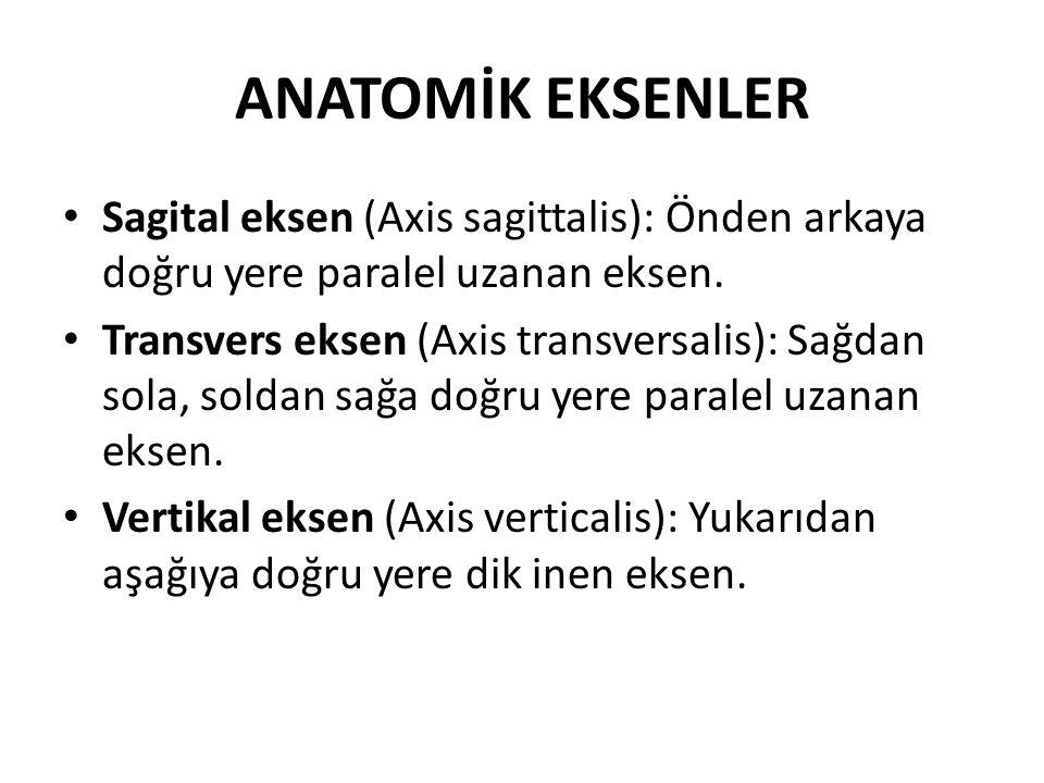 ANATOMİK EKSENLER Sagital eksen (Axis sagittalis): Önden arkaya doğru yere paralel uzanan eksen.