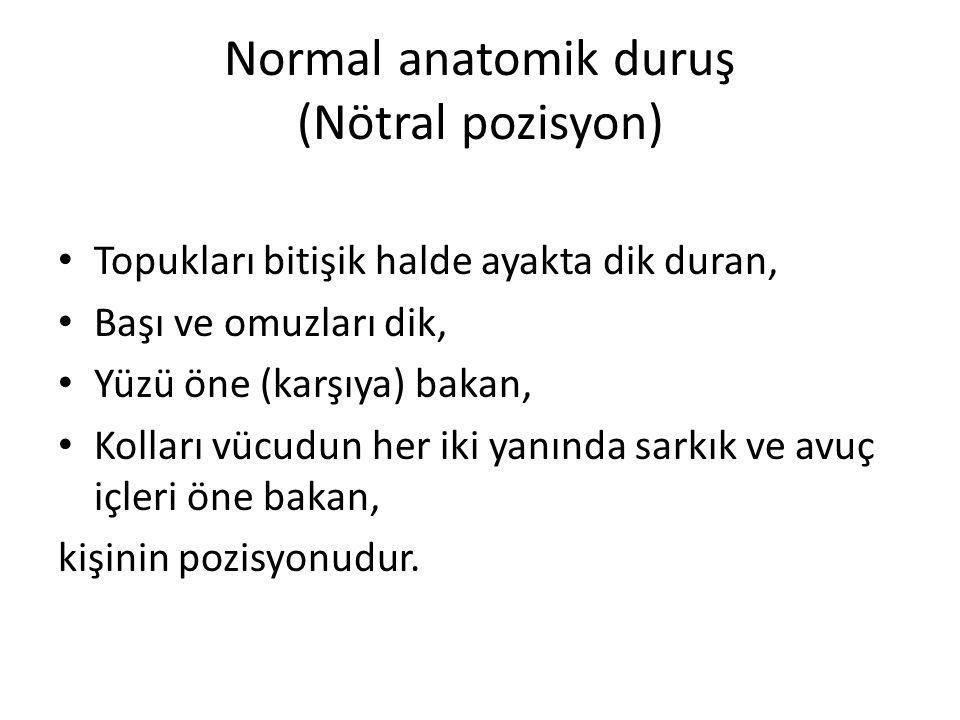 Normal anatomik duruş (Nötral pozisyon)