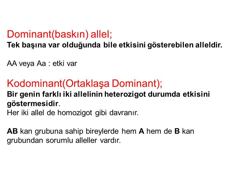 Dominant(baskın) allel;